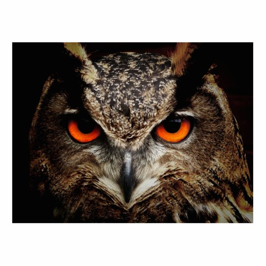 Eagle-Owl Cutout