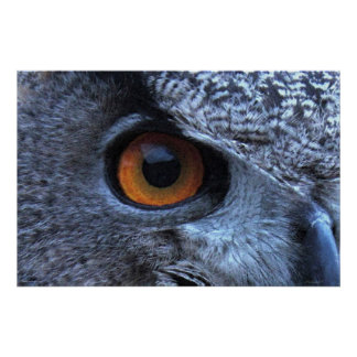 Eagle Owl Eye Poster -36x24 -other sizes available
