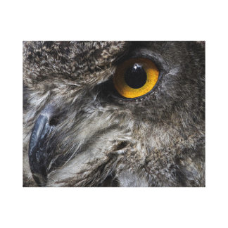 Eagle Owl Eyes Canvas Print