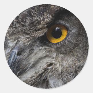 Eagle Owl Eyes Classic Round Sticker