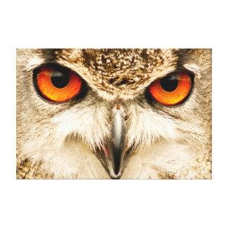 Eagle Owl Eyes Photographic Print