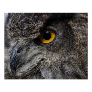 Eagle Owl Eyes Poster