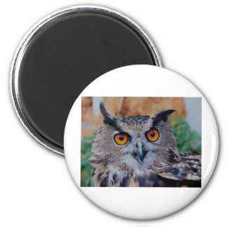 Eagle Owl Face Looking Right at You! Fridge Magnets