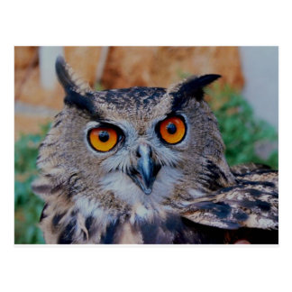 Eagle Owl Face Looking Right at You! Postcard
