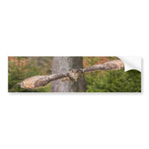 Eagle Owl in Flight Bumper Sticker