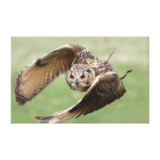 Eagle Owl In Flight Gallery Wrapped Canvas