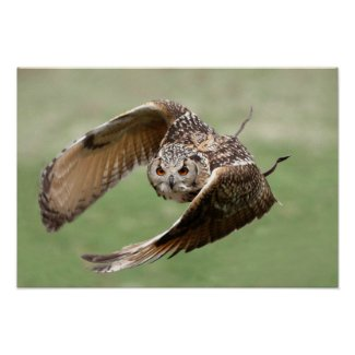 Eagle Owl In Flight Posters