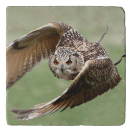 Eagle Owl In Flight Trivet