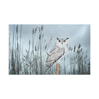 Eagle Owl In Reeds Canvas Print