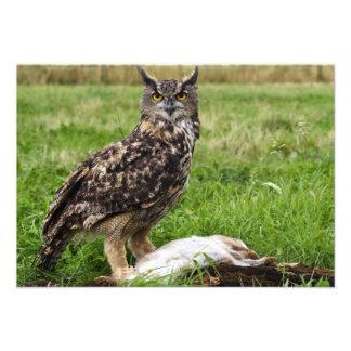 Eagle Owl Invite