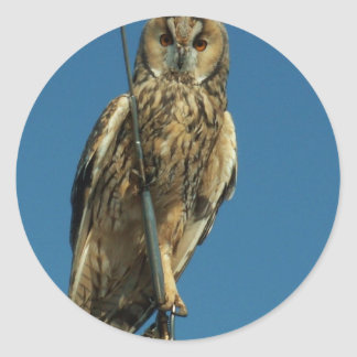 Eagle Owl on a yacht Stickers