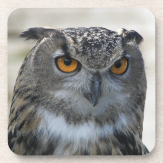 Eagle Owl Photo Drink Coaster