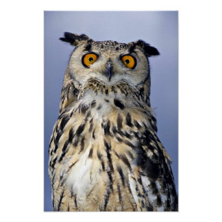 Eagle owl posters