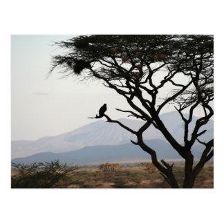 Eagle Owl Silhouette Postcard