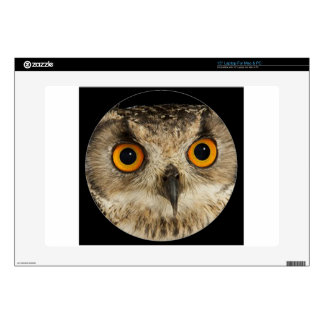"""""""Eagle Owl"""" Decal For 15"""" Laptop"""