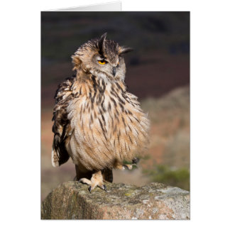 Eagle Owl - standing on one leg Card