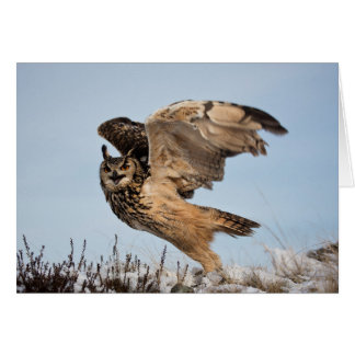 Eagle Owl Takes Flight Card