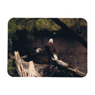 Eagle Pair Rectangular Photo Magnet