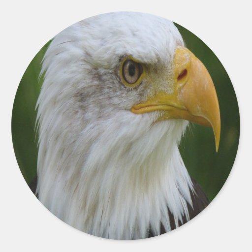 Eagle Pegatina Redonda