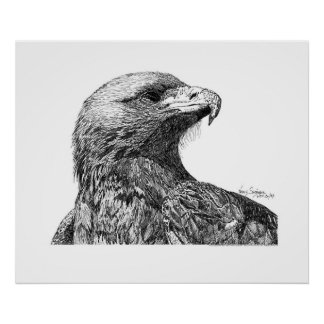Eagle Pen and Ink Drawing Poster