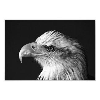 eagle photo print