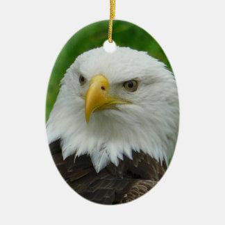 Eagle Photograph - North American Bald Eagle Ceramic Ornament