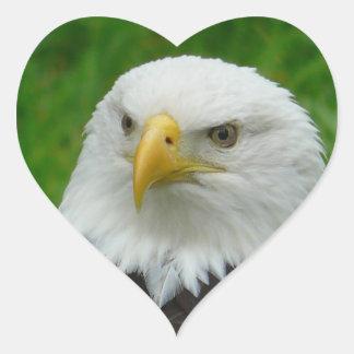 Eagle Photograph - North American Bald Eagle Heart Sticker