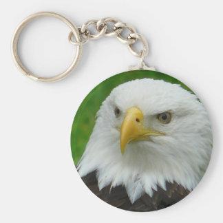 Eagle Photograph - North American Bald Eagle Keychain