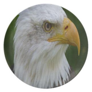 Eagle Dinner Plates