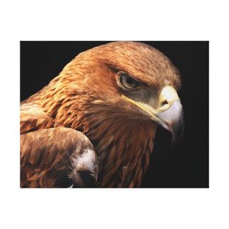 Eagle portrait isolated on black canvas print