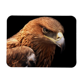 Eagle portrait isolated on black magnet