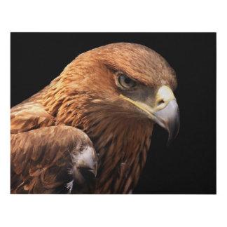 Eagle portrait isolated on black panel wall art