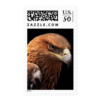 Eagle portrait isolated on black postage