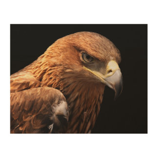 Eagle portrait isolated on black wood wall art