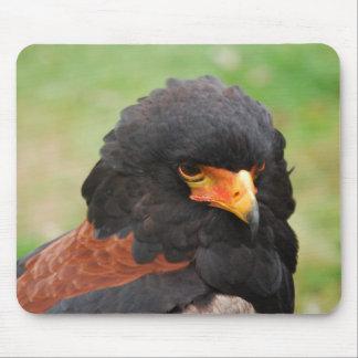 Eagle portrait mouse pad