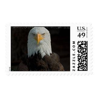 Eagle Postage Stamp