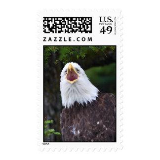 Eagle Postage Stamps