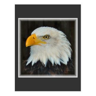 eagle postcard