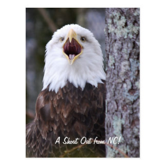 Eagle Post Cards