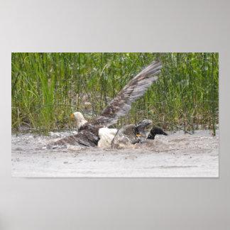 Eagle que ataca al bribón póster