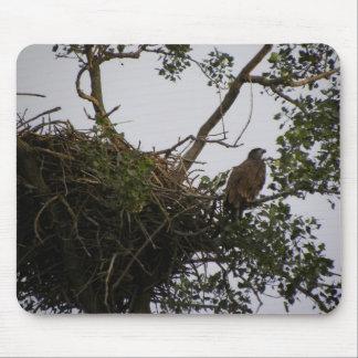 Eagle que guarda la jerarquía tapetes de raton