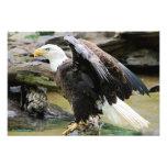 Eagle que separa las alas foto