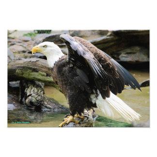Eagle que separa las alas fotografías