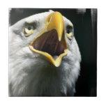 Eagle Screach Tile