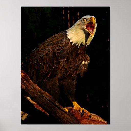 Eagle Screeching Impresiones