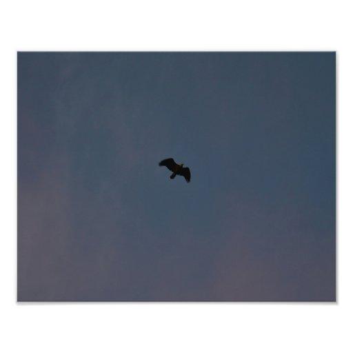 Eagle se eleva arriba impresión fotográfica