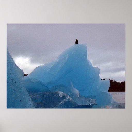 Eagle Sits on a Glacier Poster