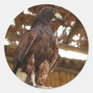 Eagle sitting classic round sticker