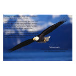 Eagle Soaring High Photographic Print