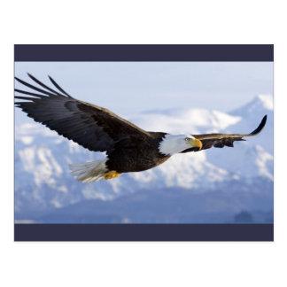 Eagle Soaring postcard